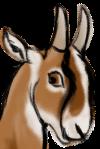dv-goat